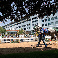 """(PPAGE1) Monmouth Park 5/13/2006  """"RICH CAT"""" in the paddock of Monmouth Park while getting ready for the first race of the season.  Michael J. Treola Staff Photographer.....MJT"""