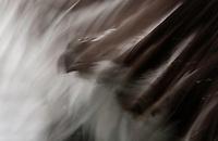 Abstract of Osprey (Pandion haliaetus) fishing, Kangasala, Finland.