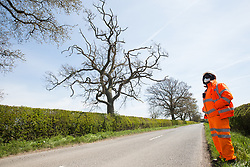 Quainton, UK. 26th April, 2021. A HS2 security guard monitors a Stop HS2 activist occupying a mature oak tree on the opposite side of the road in order to try to prevent it and two other oak trees from being felled to construct a temporary access road for the HS2 high-speed rail link. Environmental activists continue to oppose the controversial HS2 infrastructure project from a series of protection camps along its Phase 1 route between London and Birmingham.