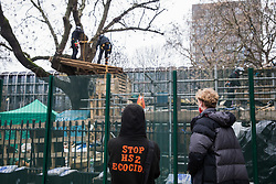 London, UK. 31 January, 2021. Two activists watch climbers from the National Eviction Team (NET) dismantling a camp in Euston Square Gardens built by anti-HS2 campaigners from HS2 Rebellion seeking to protect trees there from felling by HS2 Ltd in connection with the controversial HS2 high-speed rail project. Five activists continue to occupy tunnels beneath the camp, including Dan Hooper who was known as the roads protester Swampy during the 1990s.