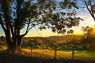 The South Downs in West Sussex.