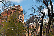 Zion National Park adjoins Springdale, Utah, USA. The North Fork of the Virgin River carved spectacular Zion Canyon through reddish and tan-colored Navajo Sandstone up to half a mile (800 m) deep and 15 miles (24 km) long. Uplift associated with the creation of the Colorado Plateaus lifted the region 10,000 feet (3000 m) starting 13 million years ago. Zion and Kolob canyon geology includes 9 formations covering 150 million years of mostly Mesozoic-aged sedimentation, from warm, shallow seas, streams, lakes, vast deserts, and dry near-shore environments. Mormons discovered the canyon in 1858 and settled in the early 1860s. U.S. President Taft declared it Mukuntuweap National Monument in 1909. In 1918, the name changed to Zion (an ancient Hebrew name for Jerusalem), which became a National Park in 1919. The Kolob section (a 1937 National Monument) was added to Zion National Park in 1956. Unusually diverse plants and animals congregate here where the Colorado Plateau, Great Basin, and Mojave Desert meet.
