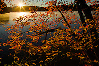 """Fall Sunrise"".Autumn views at Walden Pond.  Sunrise illuminates maple leaves and mist on the pond."