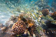 Fondos coralinos de Rangiroa, Archipiélago Tuamotu, Polinesia Francesa