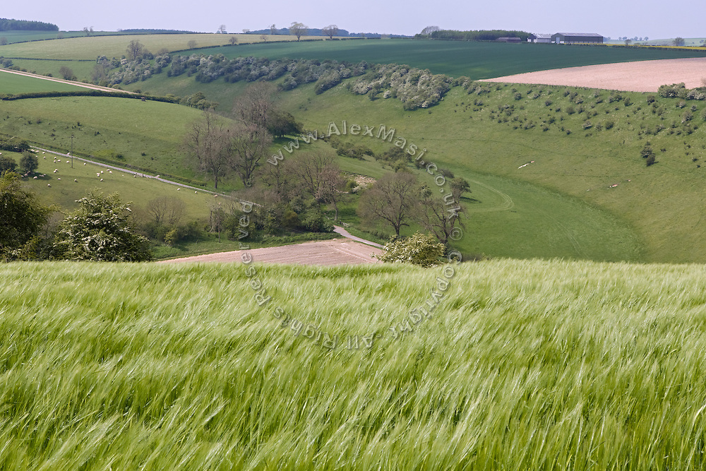 Green fields are visible on the road near Millington, Yorkshire, England, United Kingdom.