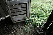 grass crawling inside through the open door