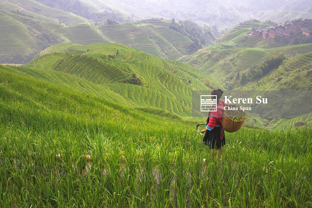 Red Yao girl in rice terraces, Xiaozhai, Longsheng, Guangxi Province, China