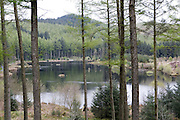Scenic lake at the Red Kite feeding centre in Nant yr Arian, Wales