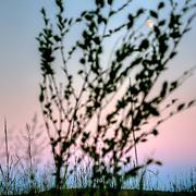 Sunset looking toward the eastern horizon in Preston Kansas, late summer 2010.