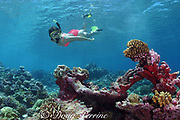 snorkeler explores shallow part of barrier reef at Bay of Wrecks, Christmas Island ( Kiritimati ), Republic of Kiribati, northern Line Islands, equatorial Central Pacific Ocean MR 299
