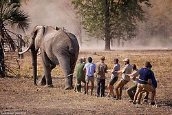 Undated picture released by Kensington Palace of Prince Harry while he worked in Malawi with African Parks as part of an initiative involving moving 500 elephants over 350 kilometers across Malawi from Liwonde National Park and Majete Wildlife Reserve to Nkhotakota Wildlife Reserve.