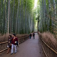 Scene at the Arashiyama Bamboo Grove in Kyoto, Japan.