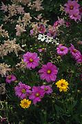 Wildflowers, Alaska<br />