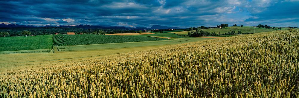 Wheat field before the storm, near Chatonnaye, Switzerland
