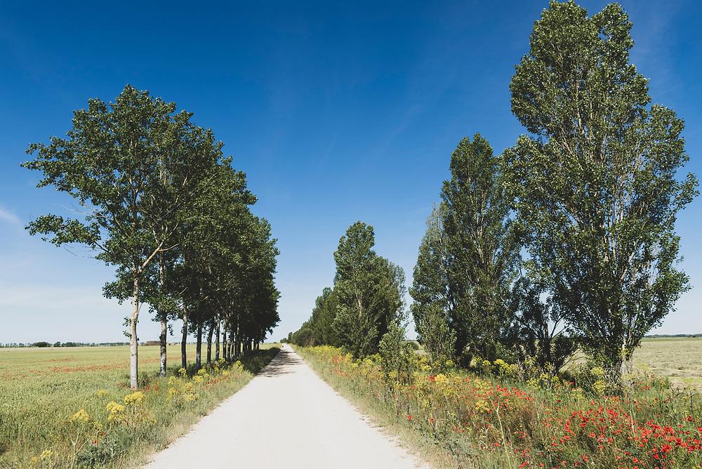 The Camino de Santiago nears the village of Calzadilla de la Cueza, Spain. (June 18, 2018)