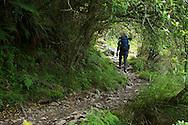 Hiking through a fern forest on the Yushan Hiking Trail.