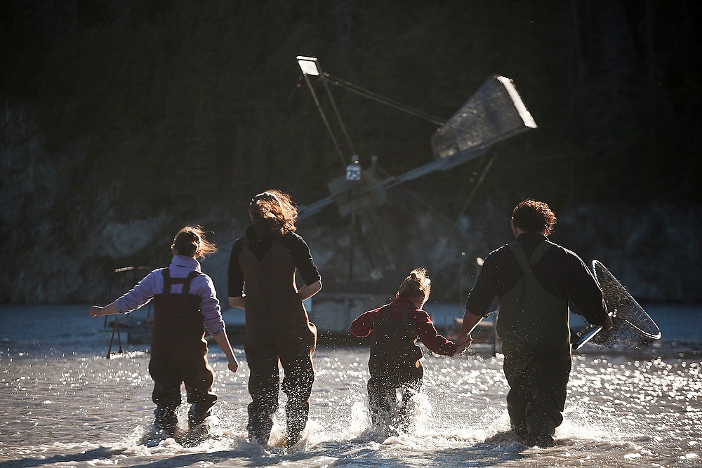 Carlos Rivera and his three daughters (left to right) Juliane, Kristian and Maia wade out to the family's fish wheel on the Copper River, near Chitina, Alaska, to harvest sockeye salmon.