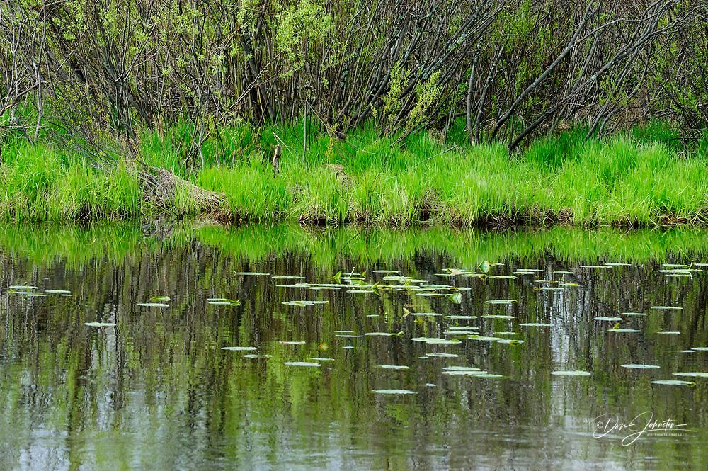 Fairbank Creek with pond lilies, Greater Sudbury, Ontario, Canada