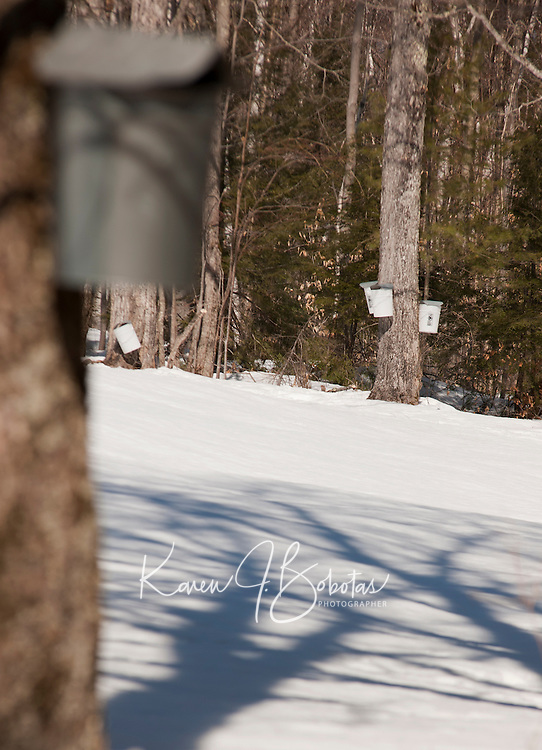 Maple sugar time in New Hampshire  March 15, 2011.