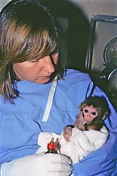 Woman Feeding Baby Rhesus Macaque