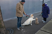 Two dogs get to know one another with their separate owners. London, UK.