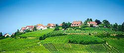 The village of Zellenberg, Alsace, France - surrounded by vineyards.<br /> <br /> (c) Andrew Wilson   Edinburgh Elite media