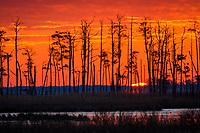 Sunrice over tidal wetlands, Blackwater National Wildlife Refuge, Cambridge, Maryland