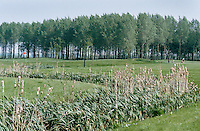 ALMERE - Golfclub GC ALMEERDERHOUT . COPYRIGHT KOEN SUYK