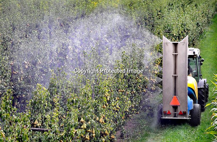 Nederland, Ooij, 14-9-2016Een tuinder rijdt door zijn perenboomgaard en spuit gewasbeschermingsmiddel op de peren die rijp zijn voor de oogst.Foto: Flip Franssen/Hollandse Hoogte