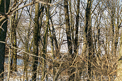 "An old steel frame bridge can be seen though the trees during the winter and is completely hidden in the summer.  The bridge is located in DeWitt County IL near coordinates 40°16'31.3""N 89°04'39.0""W"
