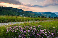 Blossom meadow with purple flowers