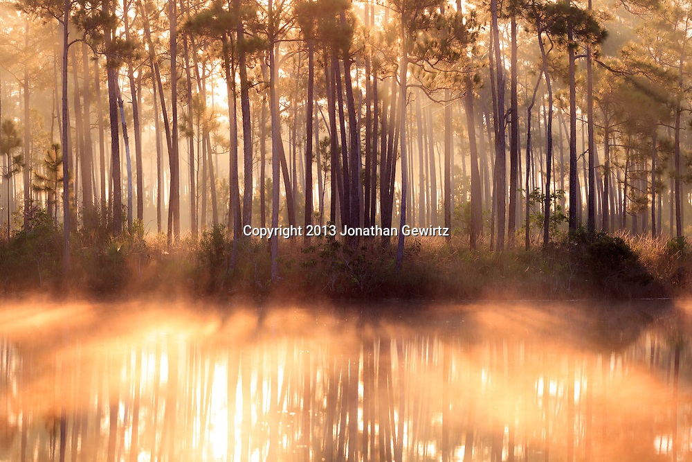 Sunrise fog and reflections at the Long Pine Key pond in Everglades National Park, Florida. WATERMARKS WILL NOT APPEAR ON PRINTS OR LICENSED IMAGES.<br /> <br /> Licensing: https://tandemstock.com/assets/22329681