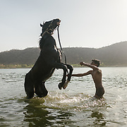 A horse rears back in a lake in Udaipur.