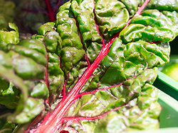 Close-up of fresh chard leaf