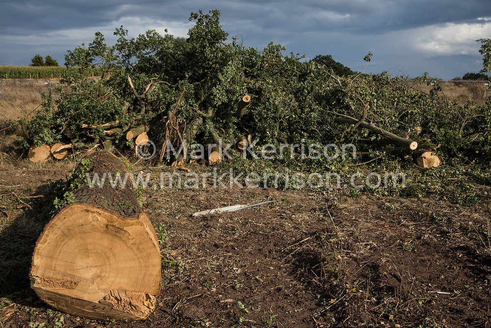 Offchurch, UK. 24th August, 2020. Trees on the Fosse Way felled as part of works for the HS2 high-speed rail link. The controversial HS2 infrastructure project is currently expected to cost £106bn and will destroy or significantly impact many irreplaceable natural habitats, including 108 ancient woodlands.