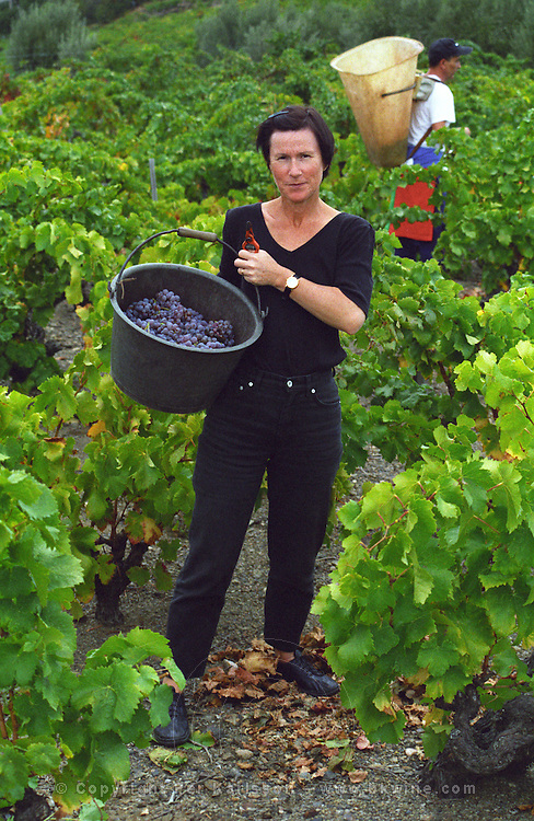 A visiting vineyard worker showing a bucket full of Grenache Noir) grapes in a vineyard in Collioure, Languedoc-Roussillon, France