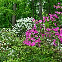 National Arboretum, Washington DC
