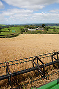 Combine harvester processing wheat in a field during harvest, view from on combine, UK food industry, Devon, UK
