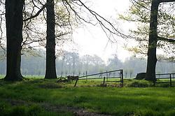 's-Graveland, Wijdemeren
