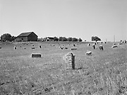 6728. Baled hay in the field of a farm near Bethany, Oregon. August 20, 1946.