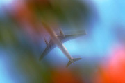Looking up from the ground to the underside of a jet airliner passing overhead in bright skies, blurred purposely using a slow camera speed, creating a separate, staggered double-image. Viewed through the foliage and flowers of a garden shrub, the plane descends in slightly hazy skies above south London, where aircraft pass overhead a few thousand feet above suburban homes, the plane is seen as a diagonal, edging across the airspace on its way to the runways at Heathrow airport, approximately 20 miles to the West. The jet is generic, minus airline markings though we see it is a twin-engined model, its two powerplants mounted beneath its wings.