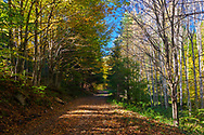 Road across a sunny colorful autumn forest