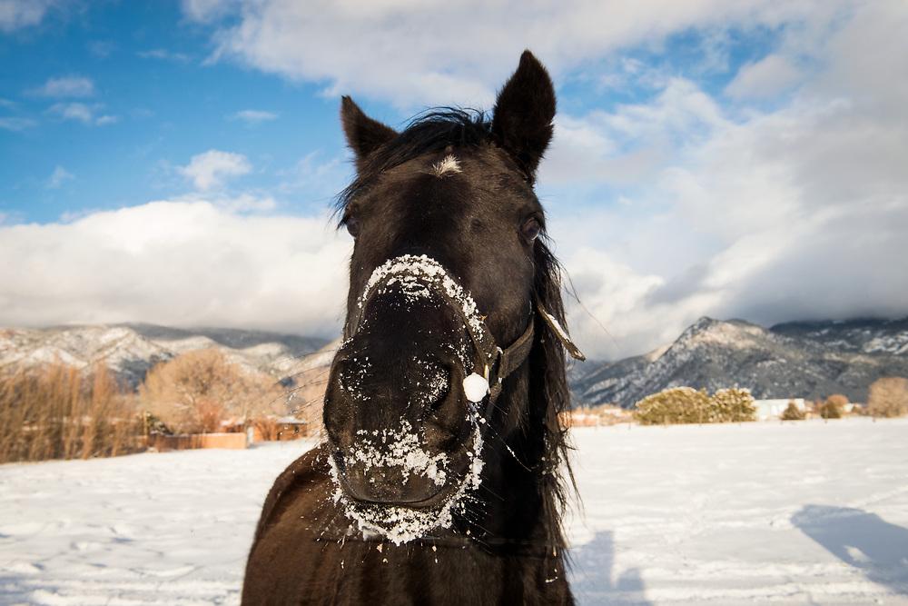 Snow Eating Horse, Arroyo Seco, New Mexico
