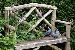 Wooden bench seat with pigeon statues. Geranium palmatum