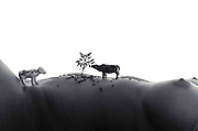livestock farming Fantasy miniature toy cows on a nude woman's torso landscape