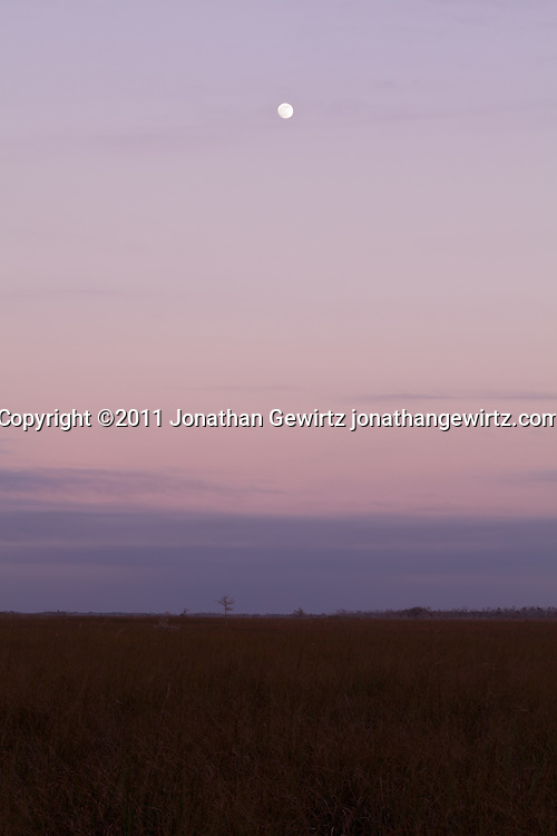 Dusk falls and an almost-full moon rises over the  sawgrass prairie near the Pa-hay-okee Overlook in Everglades National Park, Florida. WATERMARKS WILL NOT APPEAR ON PRINTS OR LICENSED IMAGES.