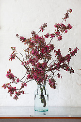 Crab apple blossom in a glass vase