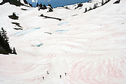 "HIkers traverse a snow field below Tomyhoi Peak in Mount Baker Wilderness, Washington. The snow is made red (""watermelon snow) by the presence of algae during the summer snow melt."
