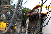 Inhauma_MG, Brasil...Detalhe de um periquito em uma gaiola em um sitio em Inhauma, Minas Gerais...Detail of a parakeet in a cage on a farm in Inhaúma, Minas Gerais...Foto: LEO DRUMOND / NITRO