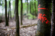 """A graffity which reads """"Käfer"""" (""""Beetle"""" to the left) at the Taunus forest close to Oberursel. The Taunus is a mountain range in Hessen, Germany, located north of Frankfurt."""